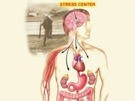 Body parts that are affected by stress